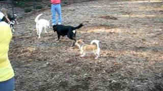Cleveland Dog Park - Teddy And Dreyfus