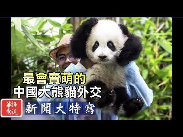用賣萌處理國際關係 看中國的大熊貓外交