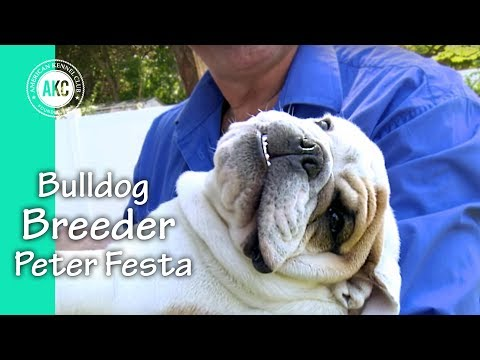 I am a Breeder - Peter Festa - Bulldogs