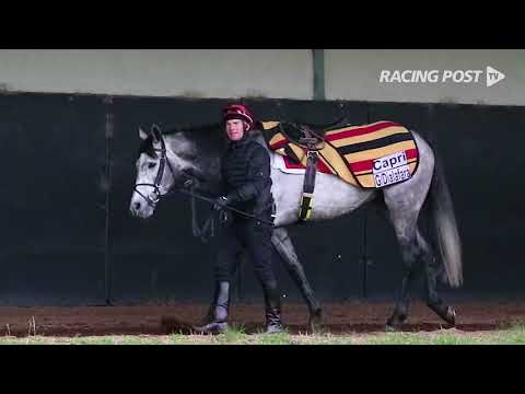 2018 flat season launched at Ballydoyle home to champion trainer Aidan O'Brien