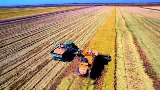 High Definition California Rice Harvest