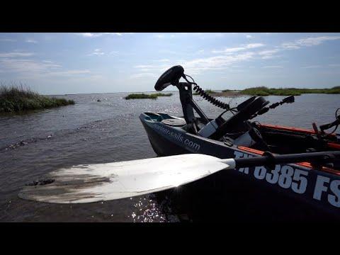 Skunk At Essex Bayou
