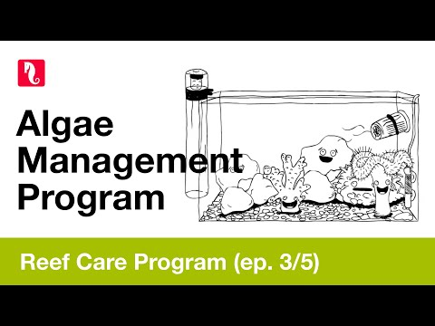 Red Sea Reef Care - Algae Management Program (episode 3/5) HD