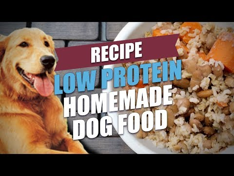 Low Protein Homemade Dog Food Recipe (Cheap And Healthy)