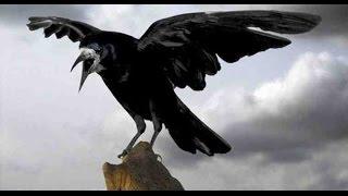 """Чёрный ворон--""""Рок-Острова""""-Владимир Захаров"""