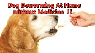 Dog Deworming Without Medicine At Home  !! ROTTWEILER DEWORMING!!  DEWORMING!!