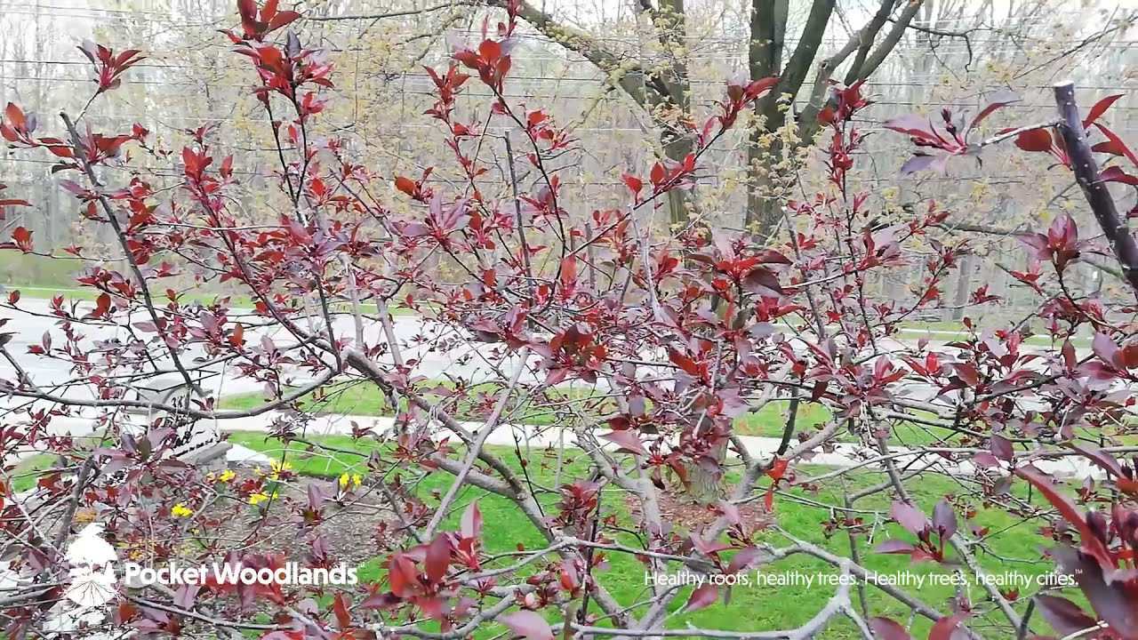 The Art of Pruning Trees
