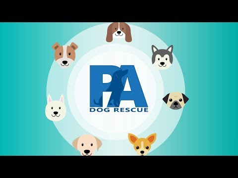 Beyond Breed Pet Matching Tool - PA Dog Rescue