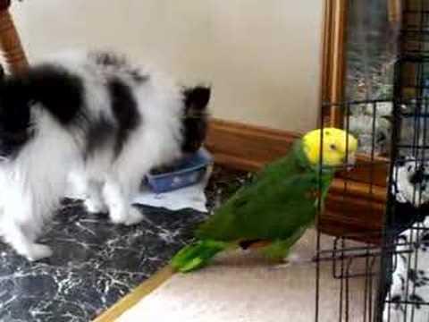 My dog Sonny and Amazon Parrot Dalton