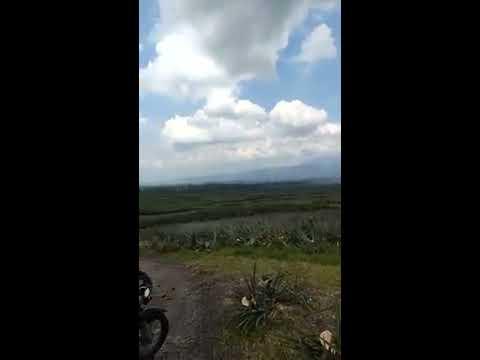 Dole Pineapple Plantation, Polomolok South Cotabato