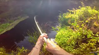 JUNGLE FISHING: Exploring River Never Fished for Years!