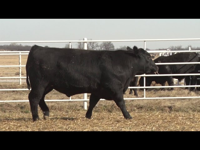 Express Ranches Lot 480