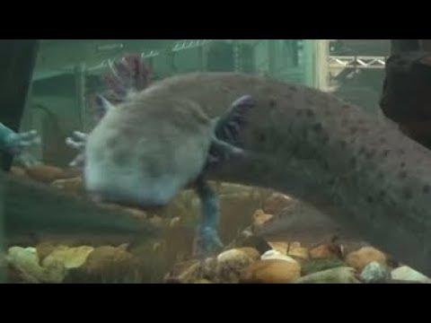 NOW U SEEN IT ALL IN THE SEA: Giant Octopus, Mermaid, Bird Fish & 40 More GMO Mutants & Monsters