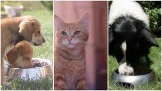 Prečo a ako podávať HUMAC psom a mačkám