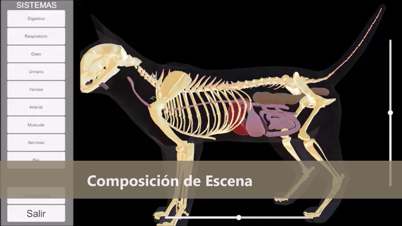 Software: Anatomía del gato 3D - YouTube