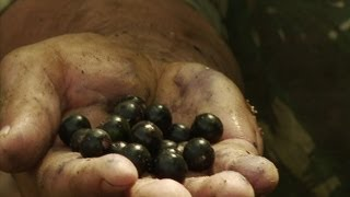 The Acai Berry Takes Brazil By Storm