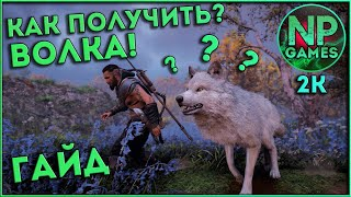 ГАЙД Assassin s Creed Valhalla ВОЛК способности всё оружие советы новичкам Ассасин Крид Вальгалла
