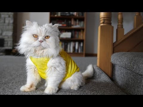 Scotiabank Marathon Check List 2017   Toronto Cat Rescue