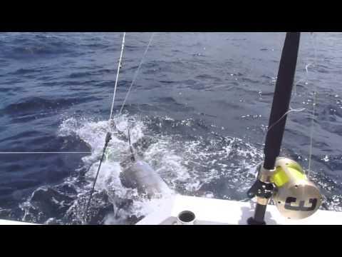 Blue Marlin Fishing - Grenada Oct 2013 (HD)