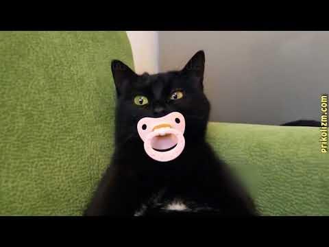 Приколы с кошками и котами #1 Кот сосущий соску