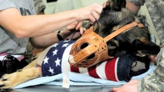 Veteran and War Dog Tribute - Justin Timberlake - Mirrors