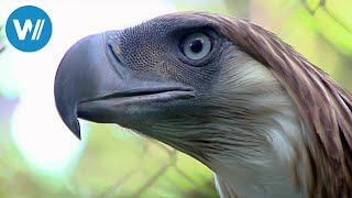 Philippinen - Rendezvous mit einem Adler (360° - GEO Reportage)