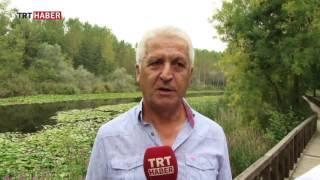 karasu belediye başkanı mehmet ispiroğlu acarlar longozu projesini anlattı