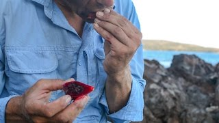 Survival! Eating Opuntia (prickly pear) cactus on Snake Island