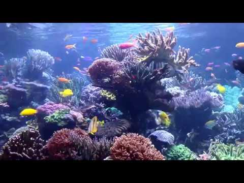 My Visit To The Long Island Aquarium: 20,000 Gallon Reef Tank