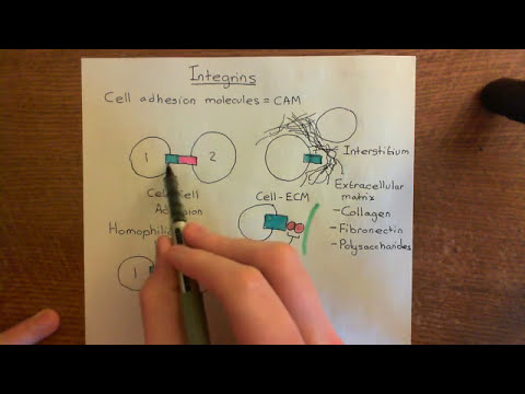 Introduction to Integrins Part 1