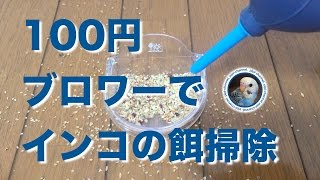 ダイソーの100円ブロワーでインコの餌の掃除をしてみたら、餌殻を息で吹...