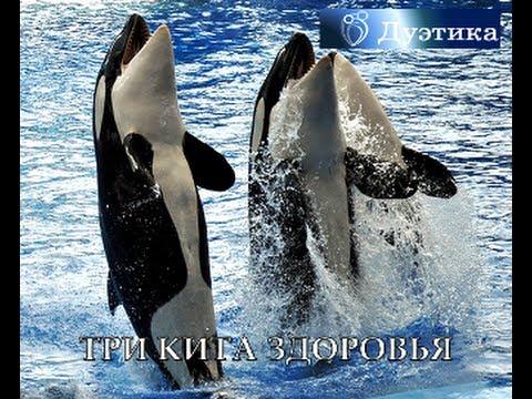 три кита скачать песни. Скачать песню Три Кита - Гербарий