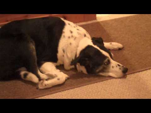 Dog Arthritis Problems and Treatments