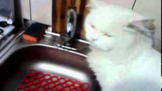 Кот не пьет с блюдца