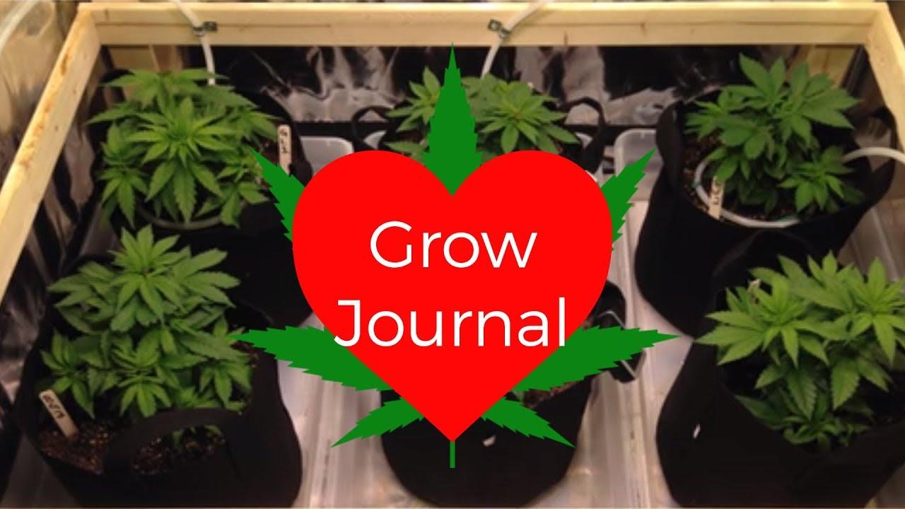 Grow Journal 4 Strains Tent ScrOg LST & Grow Journal: 4 Strains Tent ScrOg LST - YouTube