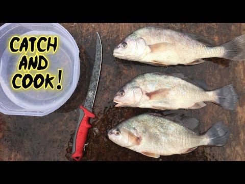 Catching And Cooking A TRASH Fish?!?!?!? Interesting Results!