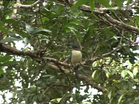 Bensbach, Tonda Wildlife Management Area - Papua New Guinea