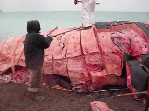 Nunavut Whale Hunt.wmv
