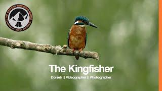 TWWS Ep07 || The Kingfisher || Dorset Videographer