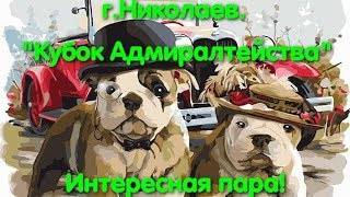 Выставка собак Николаев. Конкурс интересная пара. Супер пара. Собака. САС. Покрова. Доберман.  VLOG.
