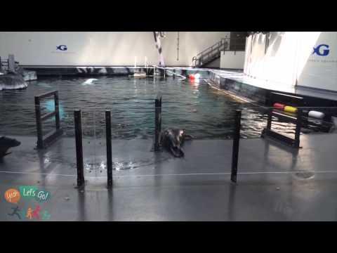 Behind the Scenes Tour at Georgia Aquarium