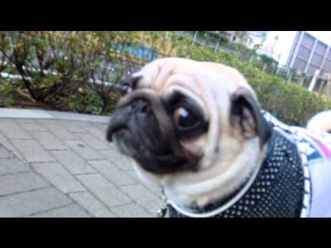 Dog Wheezing Sounds Like Choking