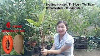 10 Giống cây trồng Mới Lạ có giá trị Kinh tế cao 0835975639 Hỗ trợ đầu ra sản phẩm