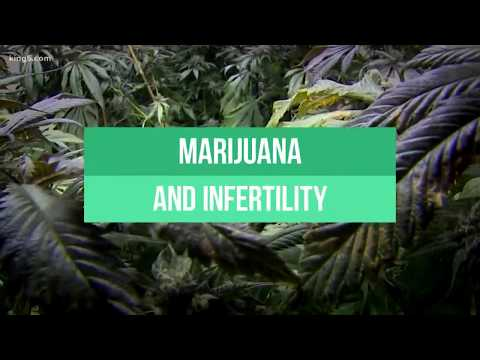 Marijuana and fertility