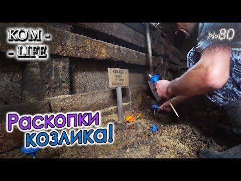 видео: КОЗЁЛ ПРОЛЕЖАЛ МЕСЯЦ В БАКТЕРИЯХ