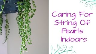 String Of Pearls: This Fascinating Beauty Makes A Great Houseplant