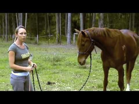 Natural Horsemanship Basics