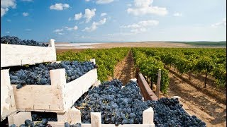 Сучасний стан та перспективи розвитку виноградарства і садівництва в Україні(, 2018-02-03T04:23:52.000Z)