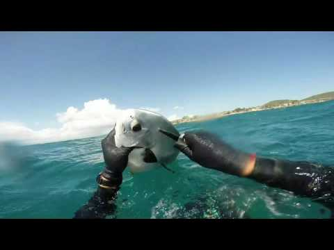 Spearfishing and Free diving Guantanamo Bay GTMO Highlights