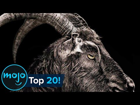 Top 20 Terrifying Horror Movie Animals